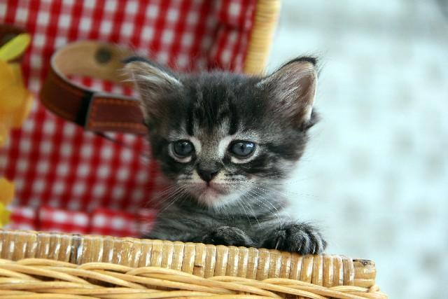 猫の飼育知識